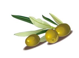 оливковое масло-как укрепить ногти